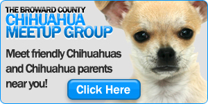 The Broward County Chihuahua Meetup Group